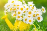 Tavaszi Rajzás Hétvégén 2 éj
