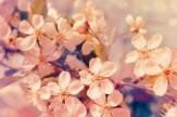 Tavaszi felüdülés