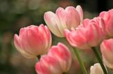 Tavaszi felfrissülés - Hétköznap