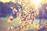 Tavaszi Verhetetlen árak