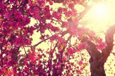 Tavaszi felfrissülés – gyermekének extra kedvezménnyel!