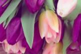 Tavaszi Ünnepi Kavalkád - Majális