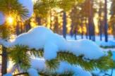 Hóvirág 2 éj