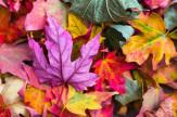 Legjobb ár őszi szünet
