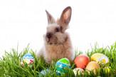 Húsvét és tavaszi szünet Somogyban