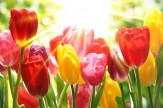 Tavaszi Felfrissülés - Hétvége