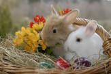 Húsvétolás a Lövérben
