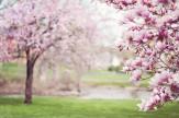 Tavaszi ajánlat hétvégén
