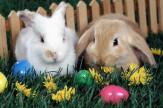 Húsvéti NYULatság! - 2 éjszaka