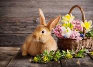 Wellness ajánlatok Húsvétra